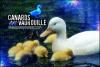 duckies.png