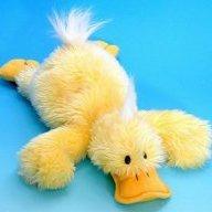Duckje